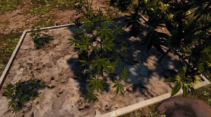 7 days to die cannabis mod additional screenshot 1
